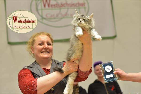 Limbach 2019 - Best of best Maine Coon Sonntag